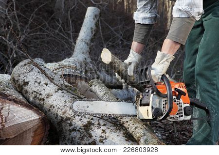 Lumberjack Using Chainsaw Cutting Big Tree During The Autumn Close Up