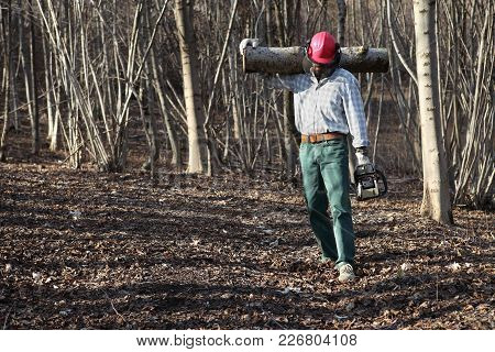 Lumberjack Woodcutter With Chainsaw Carrying Logs Of Big Tree In The Autumn Forest