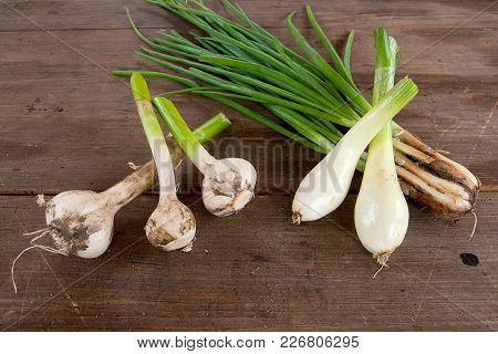 Garlic Bulb And Spring Onions, Harvested Vegetables On Vintage Wooden Background..