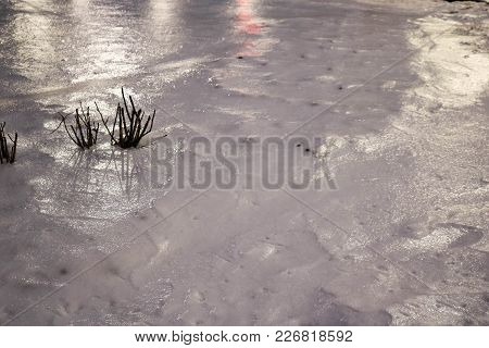 Small Black Weak Plants, Bushes Make Their Way Through The Cold Ice Covered With Ice Crust At Night.