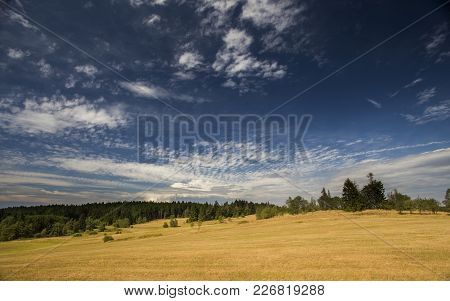 Summer Meadow With Beautiful Blue Sky And Forrest In The Background.