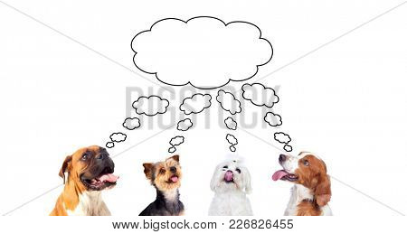 Pensive dogs isolated on a white background