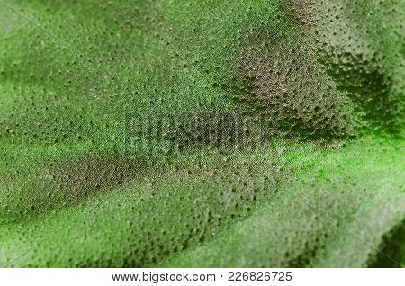 Leaf Of A Plant Violet Pattern Texture Macro