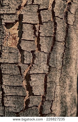 Abstract Texture Of A Surface Tree Like Background