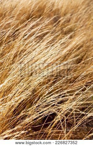 The Abstract Texture Of A Yellow Grass