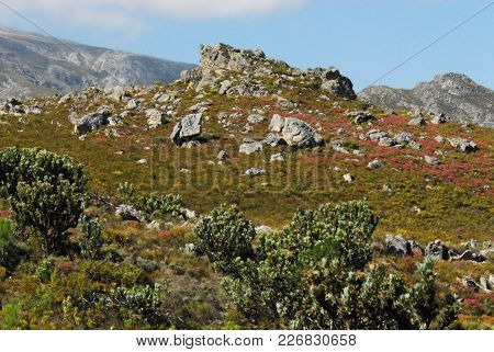 A Wonderfully Colorful Hill Filled With Fynbos And Wild Flowers