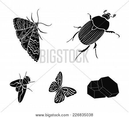 Arthropods Insect Beetle, Moth, Butterfly, Fly. Insects Set Collection Icons In Black Style Vector S
