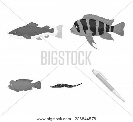 Frontosa, Cichlid, Phractocephalus Hemioliopterus.fish Set Collection Icons In Monochrome Style Vect