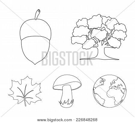 Oak, Acorn, Edible Mushroom, Maple Leaf.forest Set Collection Icons In Outline Style Vector Symbol S