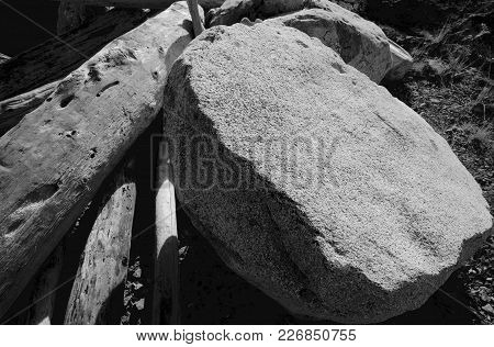 Black And White Of Granite Boulder And Driftwood Logs In The Sun At Cattle Point, Victoria, British