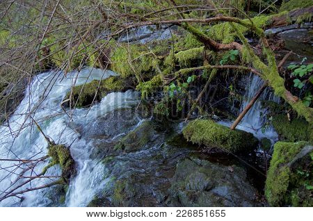 Moss Covered Logs And Branches Overhang The Top Of A Waterfall, Gowlland Tod Provincial Park, Britis