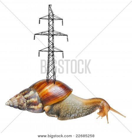 Enorme caracol con torre en Shell aislado sobre fondo blanco