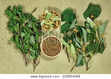 Birch, Linden. Dry Herbs For Use In Alternative Medicine, Phytotherapy, Spa, Herbal Cosmetics. Prepa