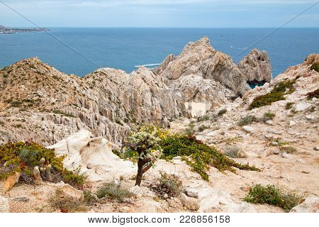 Cactus On Mount Solmare Overlooking Divorce Beach At Lands End In Cabo San Lucas In Baja California