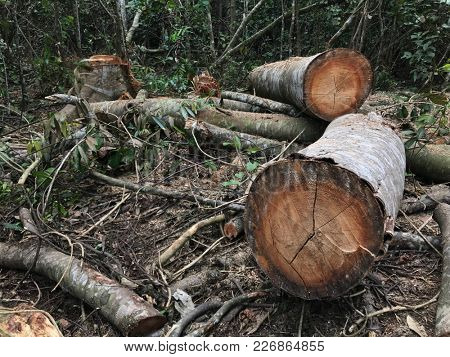 Tree trunks chopped down in a tropical rainforest.