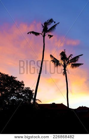 Silhouetted Palm Trees Against A Vibrant Coloured Sunset. Bali, Indonesia.