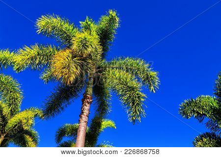 In The Clear Sky The Branch Of The Palm
