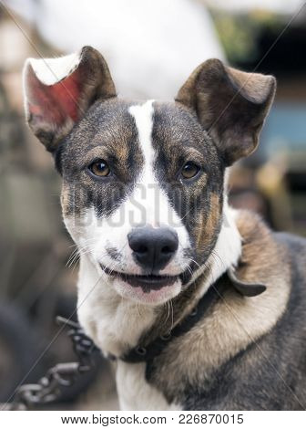 The Happy Smiling Dog On Face In Outdoor