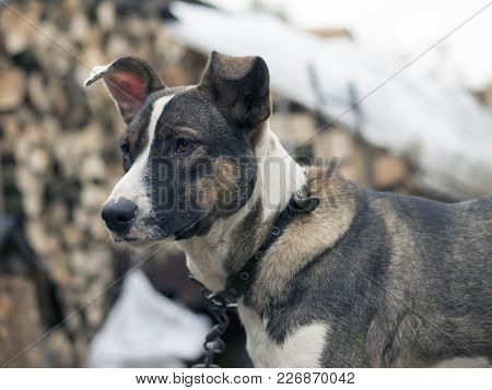 The Sad Stray Dog Waiting For Its Owner