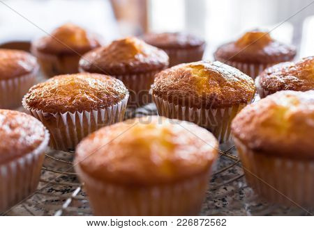 Batch Of Homemade Freshly Baked Cupcakes Or Muffins Cooling On A Wire Rack In The Kitchen In A Close