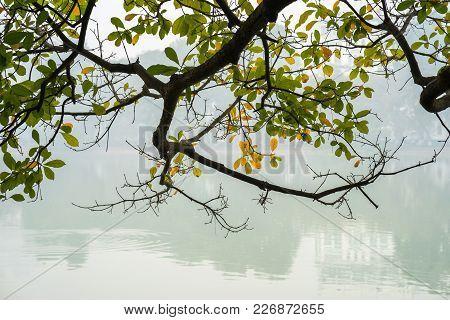 Branch With Orange Autumn Leaves Against Misty Lake At Hoan Kiem Lake, Center Of Hanoi, Vietnam