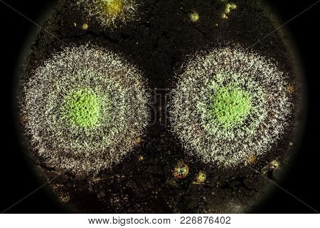 Development Of Green Mold On An Organic Basis, Abstract Background