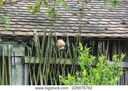 In Rural Wicker Fence Of Twigs Hanging Crock