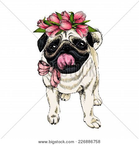 Portrait Of Pug Dog Wearing Tulip Crown. Welcome Spring. Hand Drawn Colored Vector Illustration. Eng