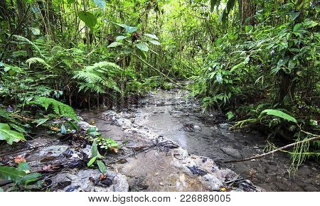 A Stream Flows Through Dense And Lush Jungle In Southern Belize.