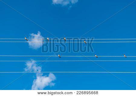 Birds Sitting On Wires