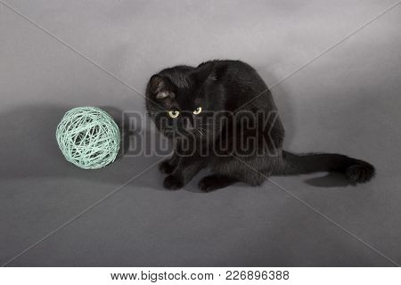 Black Cat On A Black Background Animal