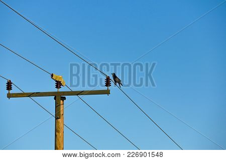 Single And Lonely Rave Sitting On A Simple High Power Line.