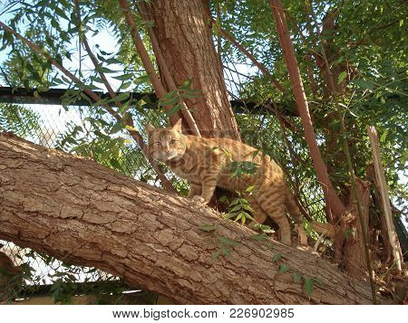 Animals, Egyptian Robber, Cat, Predator, Egypt, Sharm El-sheikh, Ryzhik,