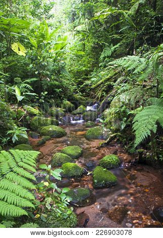 A Stream Flows Through The Dense Jungle In The Monteverde Cloud Forest, Costa Rica.