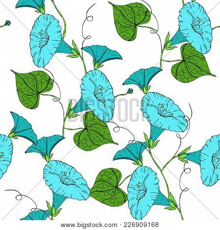 Vector Colored Pattern With Blue Bindweed On White Background. Vintage Flowers.