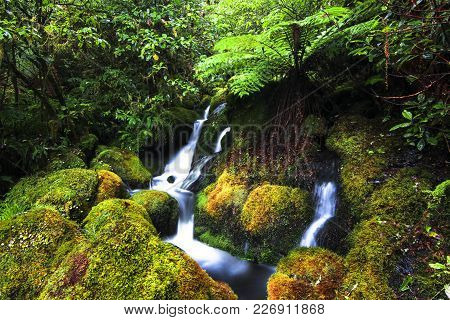 A Small Stream Flows Through A Lush Mossy Section Of Temperate Rainforest Near Lake Waikaremoana, Ne