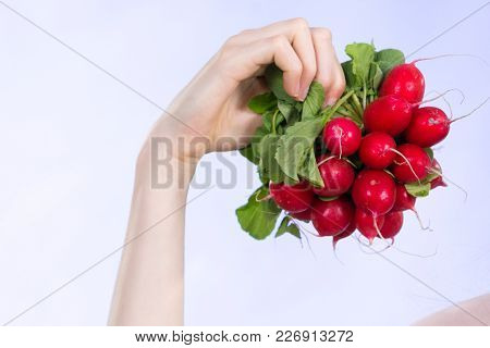 Woman Hand Holding Red Delicious Raddish Vegetable On Blue.