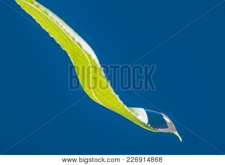 a green leaf with drop - macro photo