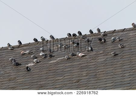 A Small Flock Of Pigeons Resting Up On The Roof