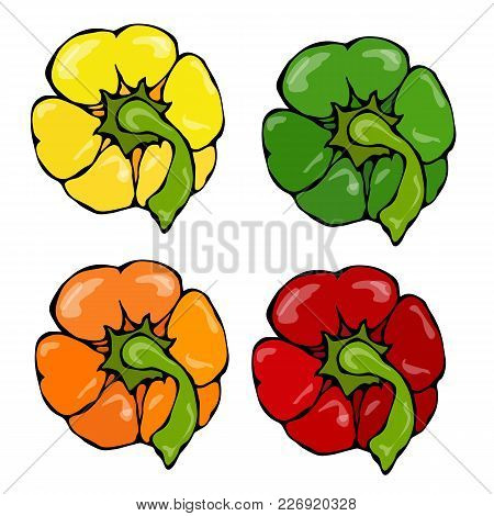 Orange, Yellow, Green, Red Paprika, Bell Pepper Or Sweet Pepper Top View. Hand Drawn Sketch Vector I