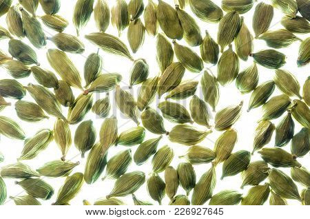 Cardamom Pods Pattern, A Closeup Photo Image Of Dried Green Cardamom Pods On White Bright Light Back