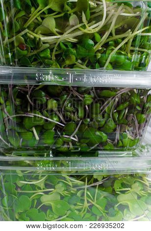 Mix Of Green Grass Sprouts, Arugula, Red Cabbage, Radish In Box