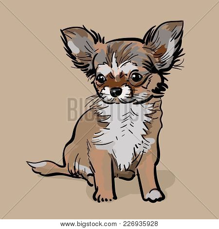 Little Chihuahua Dog. Puppy The Afflicted Chihuahua Dog Turned And Waited. Illustration