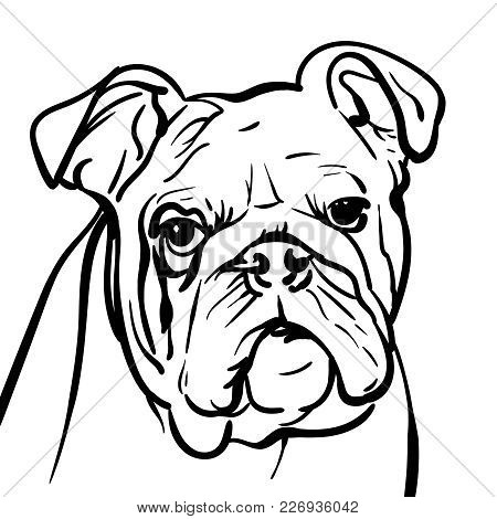 Dog Bulldog. Outlines A Sad Bulldog Dog With A Wise Look. Illustration