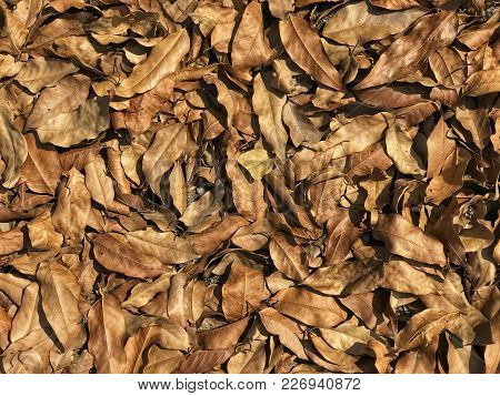 Pile Of Dead Leaves Under The Tree Growing By The Road.