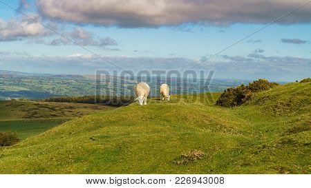 View Over The Landscape Of The Brecon Beacons National Park, Seen From Gospel Pass, Powys, Wales, Uk