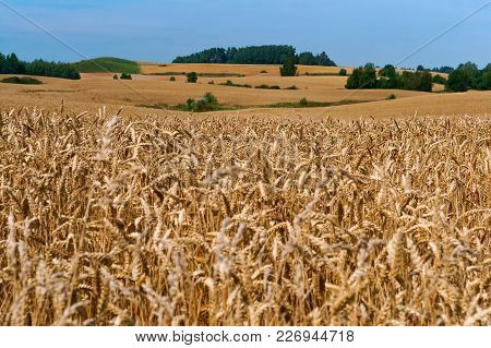 Agricultural Land, Field Crops, Wheat Field Cereal