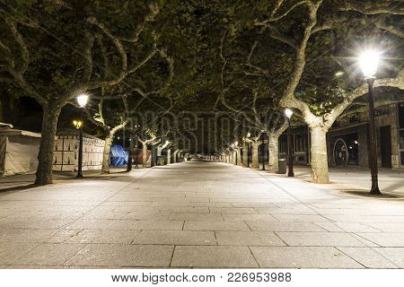 Long Path Street Lined With Green Trees At Night, Spain