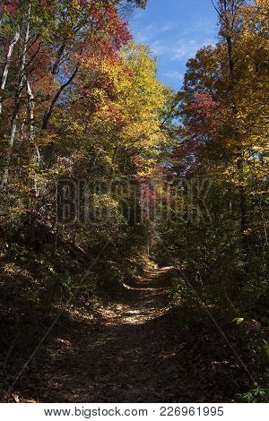 Hiking Trail Through Beautiful, Colorful Autumn Landscape Of The Fires Creek Area In Western North C