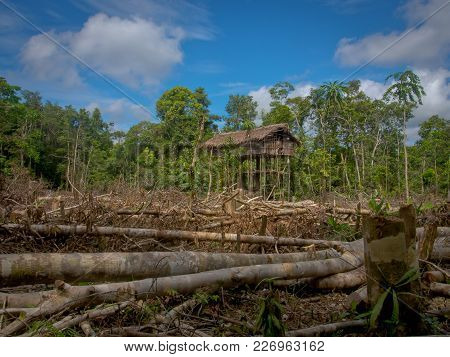 The Jungle, Indonesia - January 16, 2015: Houses On The Trees. That Way Korowaya Tribe Builds Houses